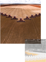 An image of a group 10 Combine Harvesters all simultaneously harvesting a large field of crops